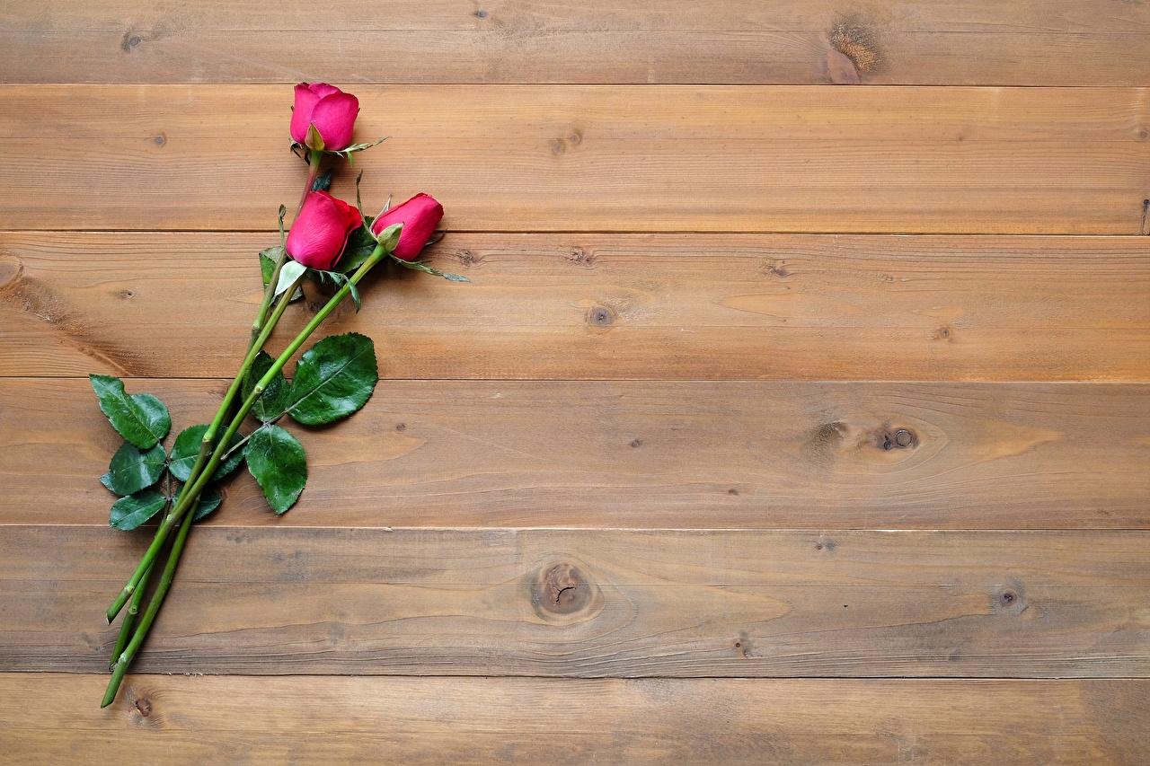 Картинки роза цветок Шаблон поздравительной открытки Доски Розы Цветы
