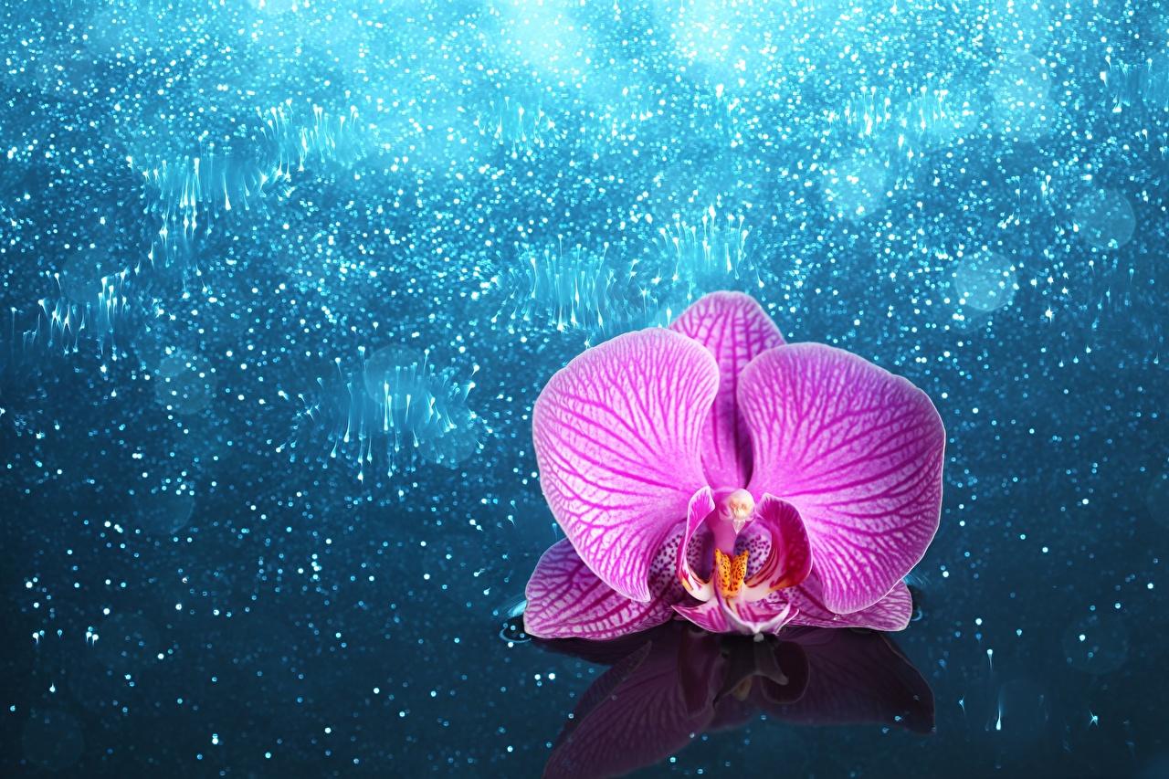 Фотографии орхидея розовая Цветы Орхидеи Розовый розовые розовых цветок
