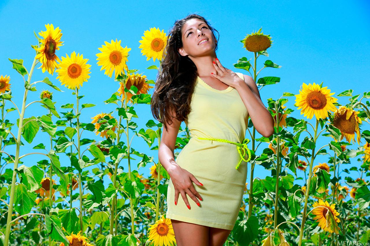 Картинка Rosella RU 98 Поза девушка Подсолнечник Взгляд платья позирует Девушки молодая женщина молодые женщины Подсолнухи смотрит смотрят Платье