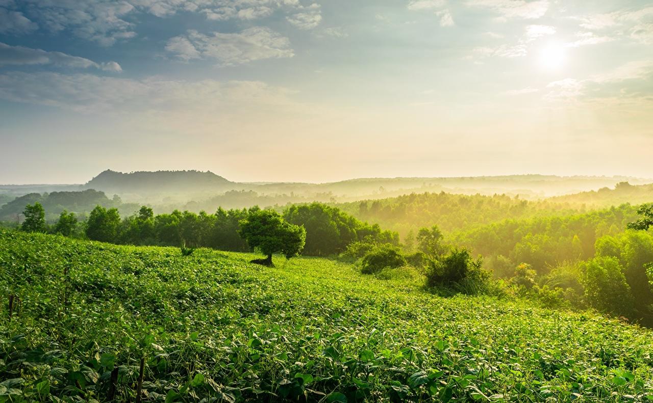 Фотографии Tea plantation тумана Природа холмов Туман тумане холм Холмы