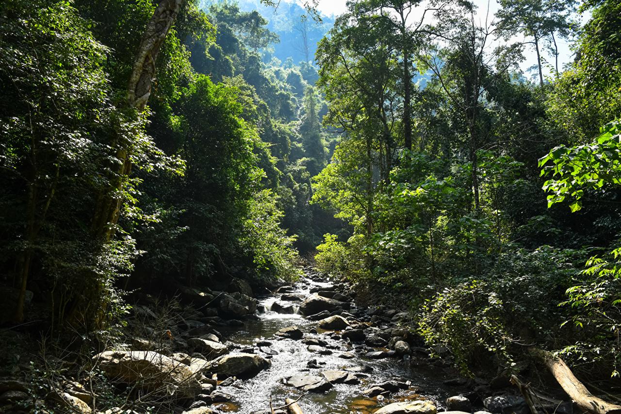 Фото Таиланд Pala-U Waterfall ручеек Природа лес Тропики Камень дерево Ручей Леса тропический Камни дерева Деревья деревьев