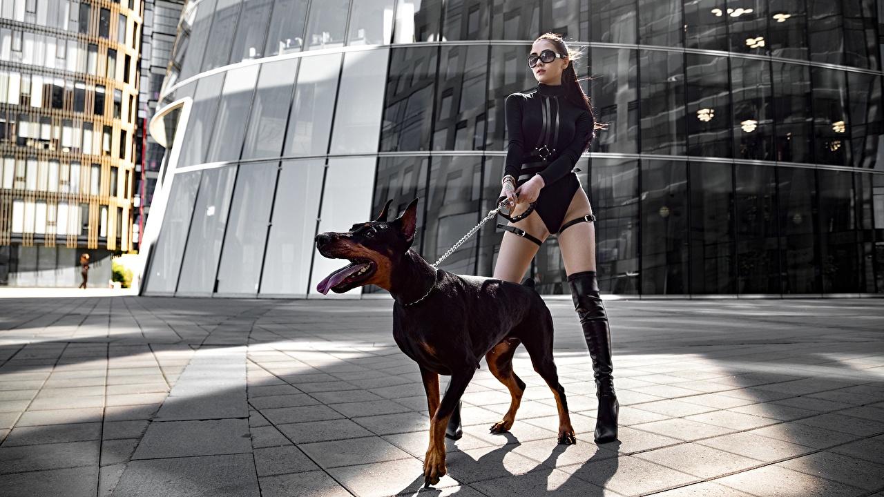 Фотография Доберман Собаки фотомодель Yuri Semenov Поза красивая молодые женщины ног Животные доберманы собака Модель позирует красивый Красивые девушка Девушки молодая женщина Ноги животное