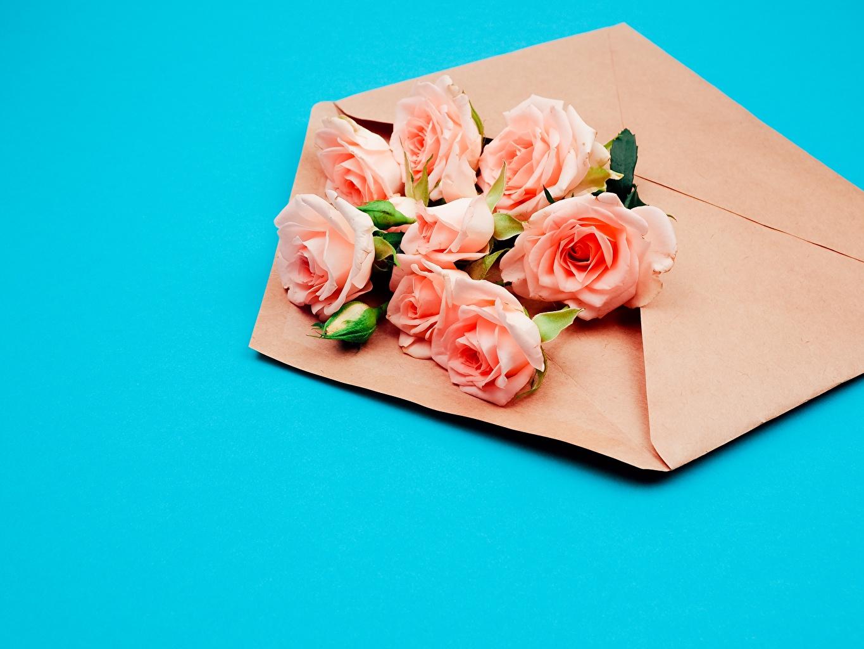 Фото Конверт букет Розы Цветы Цветной фон Букеты роза цветок