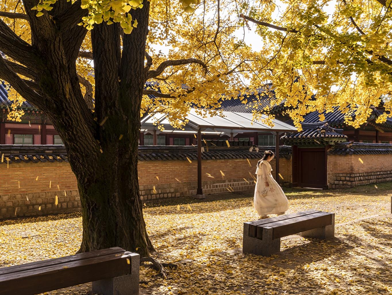 Фотография Сеул Листья Южная Корея Gyeongbok Palace Осень Азиаты Скамейка Города Деревья лист Листва осенние азиатки азиатка Скамья город дерево дерева деревьев
