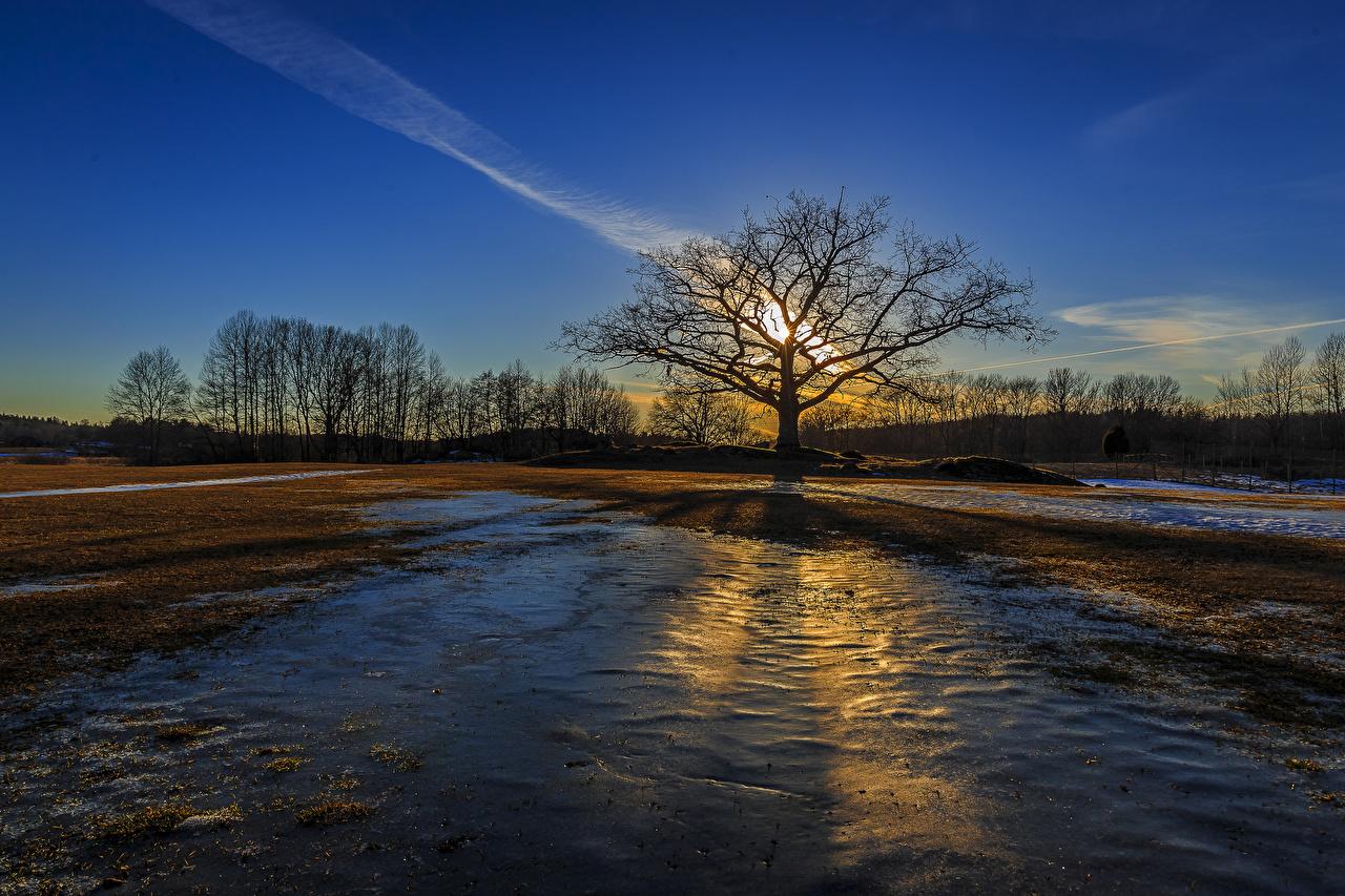 Обои Природа Поля Рассветы и закаты Деревья
