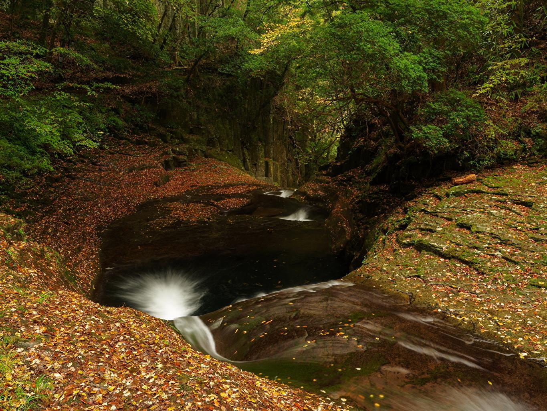 Обои для рабочего стола Листья осенние Природа Водопады лес лист Листва Осень Леса