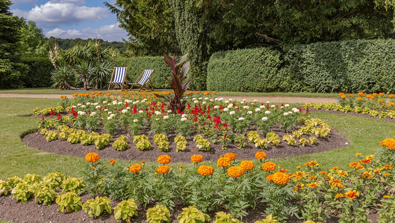 Обои для рабочего стола Англия Hughenden Manor Природа парк Бархатцы газоне кустов Парки Газон Кусты