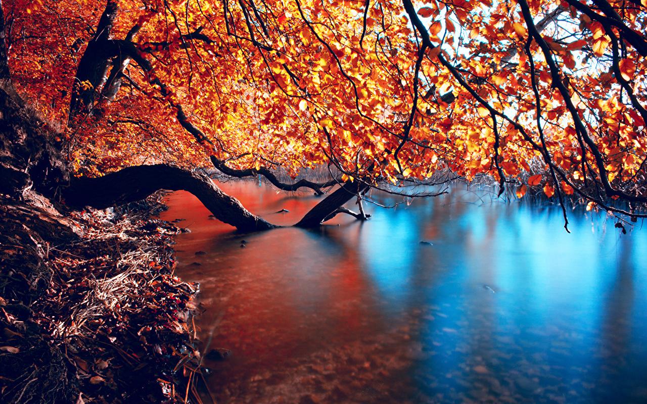 Обои для рабочего стола Природа осенние Вода ветвь Времена года Осень воде ветка Ветки на ветке сезон года