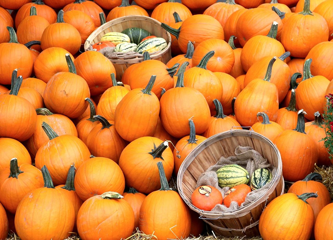 Фото Тыква Природа Оранжевый Корзина Много оранжевая оранжевые оранжевых корзины Корзинка