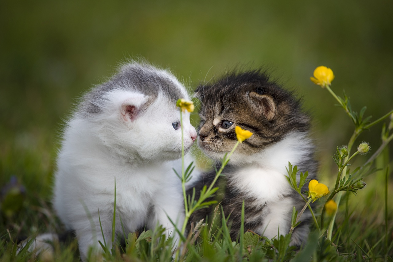 Картинки котенка кошка Размытый фон милый две Трава Животные котят Котята котенок кот коты Кошки боке милая Милые Миленькие 2 два Двое вдвоем траве животное