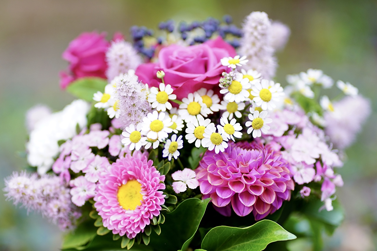 Фотография Размытый фон букет Розы Цветы Георгины Крупным планом боке Букеты роза цветок вблизи
