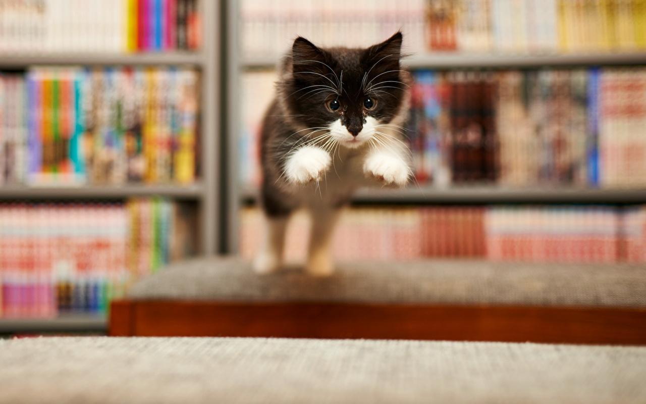 Картинки животное Кошки Лапы Прыжок смешная смотрят Животные кот коты кошка лап прыгать прыгает в прыжке Взгляд Смешные смотрит смешной забавные