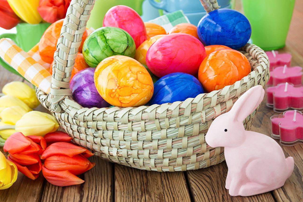 Картинки Пасха Кролики Разноцветные яйцами Тюльпаны Корзинка яиц Яйца яйцо корзины Корзина