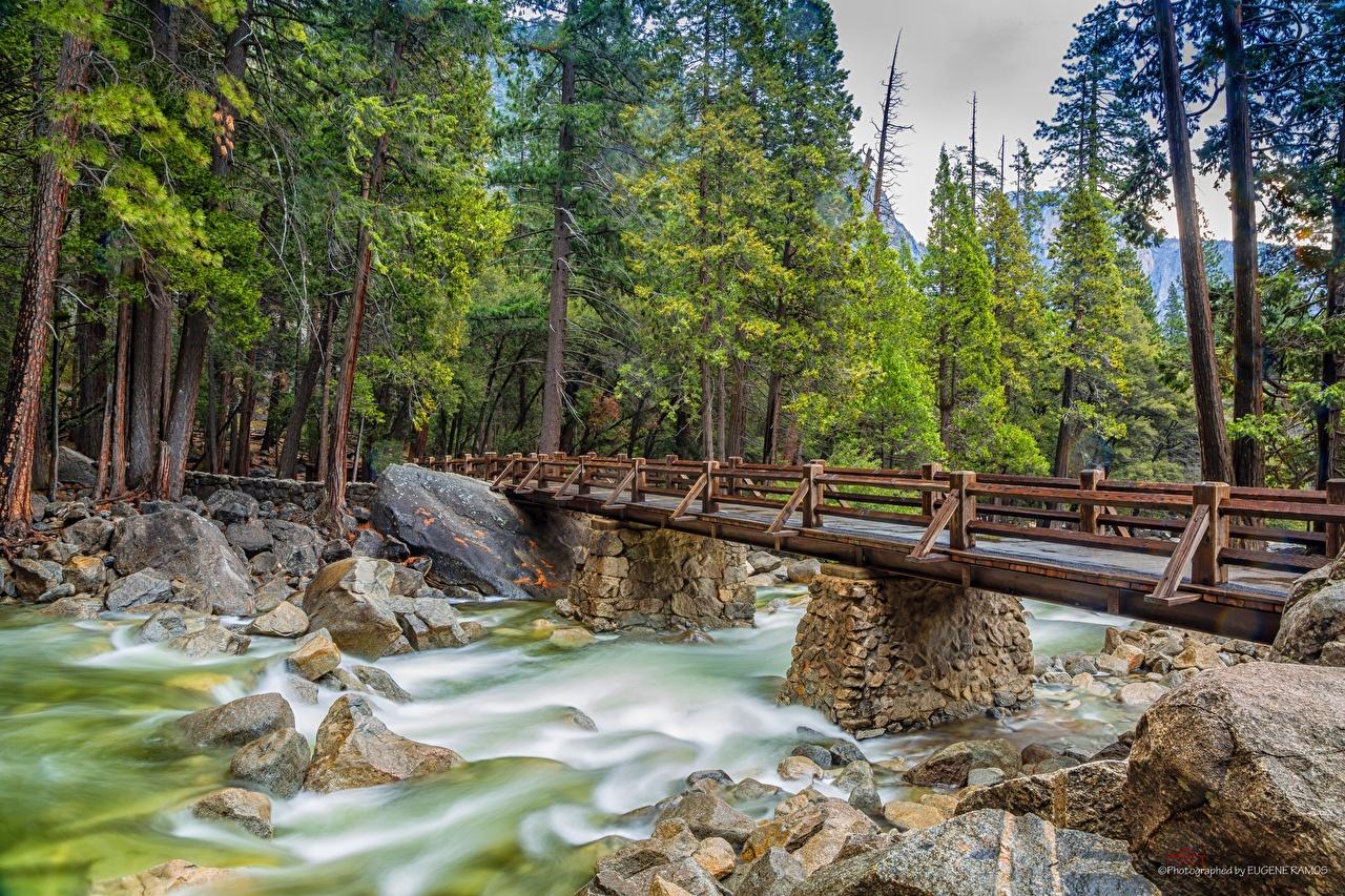 Фотография Йосемити Калифорния США мост Природа парк Реки Камень дерево калифорнии штаты америка Мосты Парки река речка Камни дерева Деревья деревьев