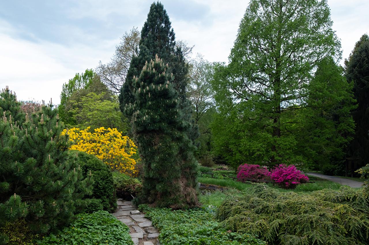 Фото Германия Botanischer Garten Solingen Ель Природа парк Кусты деревьев ели Парки дерево дерева кустов Деревья