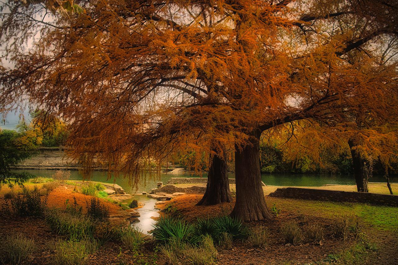 Фотография Техас штаты Austin Осень Природа река деревьев США америка осенние Реки речка дерево дерева Деревья