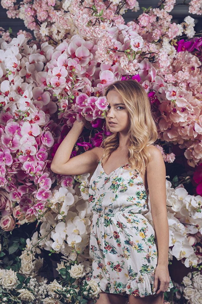 Картинка Блондинка Орхидеи Девушки смотрят платья  для мобильного телефона блондинки блондинок орхидея девушка молодая женщина молодые женщины Взгляд смотрит Платье