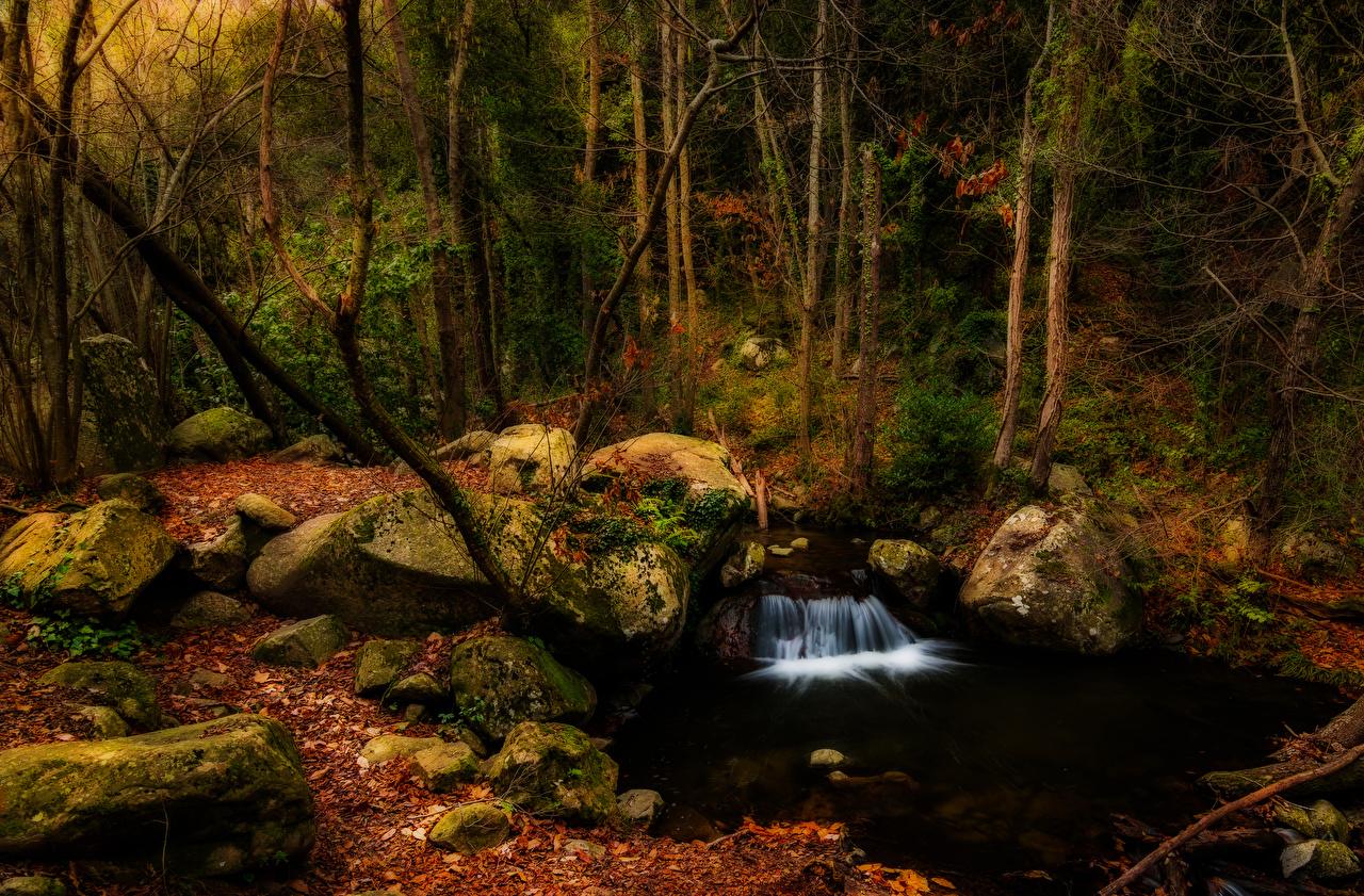 Фотография Испания Vidra Catalonia Природа осенние Водопады Леса мха Камень Деревья Осень лес Мох мхом Камни дерево дерева деревьев