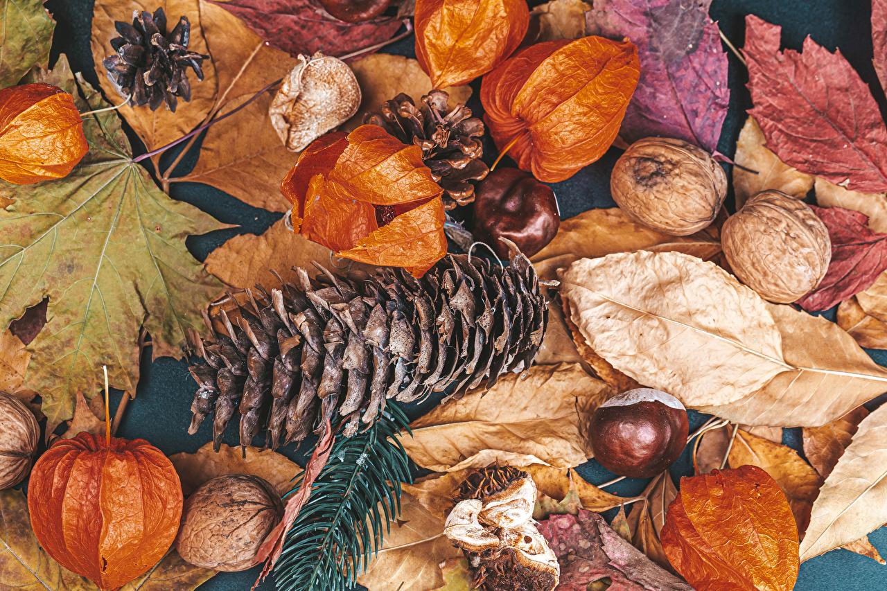 Фотографии Каштан Листва осенние Природа Шишки Орехи лист Листья Осень шишка