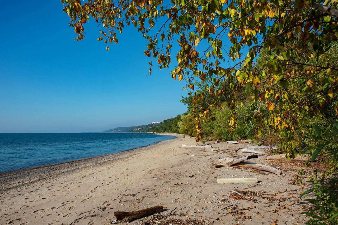 Фотография Природа Канада beach Lake Ontario Ветки пляже Торонто Побережье ветвь ветка на ветке Пляж пляжи пляжа берег