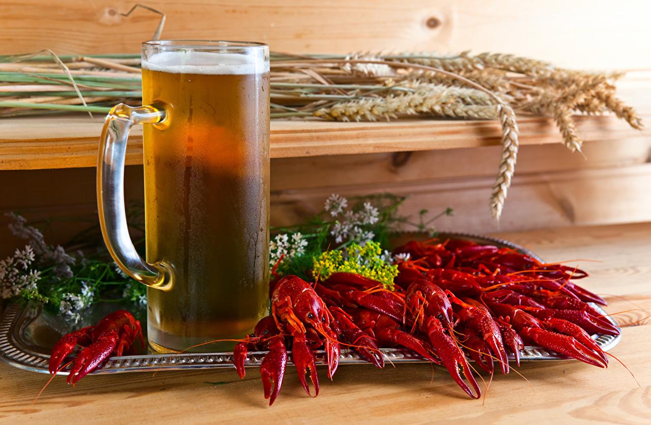Картинка Пиво Раки Колос Кружка Продукты питания колосья колоски колосок Еда Пища кружке кружки
