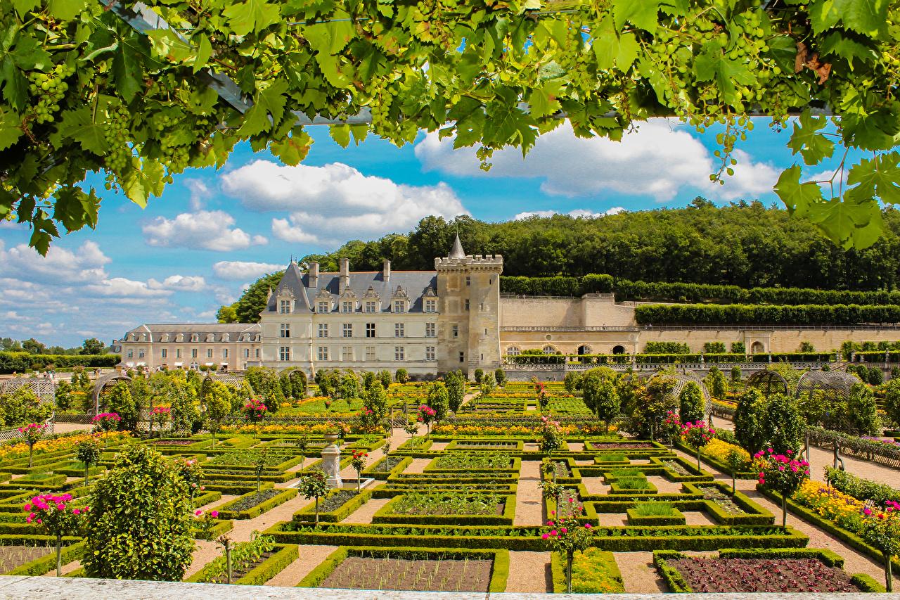 Фотография Франция Chateau and Gardens of Villandry замок Природа Сады Виноград ветка город кустов Дизайн Замки ветвь Ветки на ветке Кусты Города дизайна