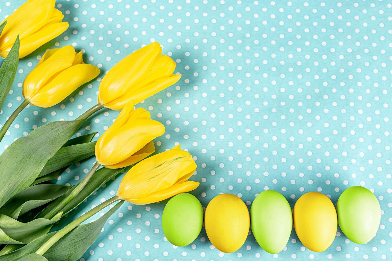 Картинка Пасха Яйца желтые Тюльпаны Цветы Продукты питания яиц яйцо яйцами желтых Желтый желтая тюльпан цветок Еда Пища