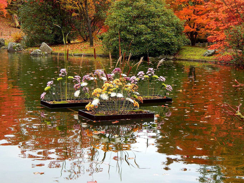 Картинки Природа Пруд Парки Хризантемы Кусты