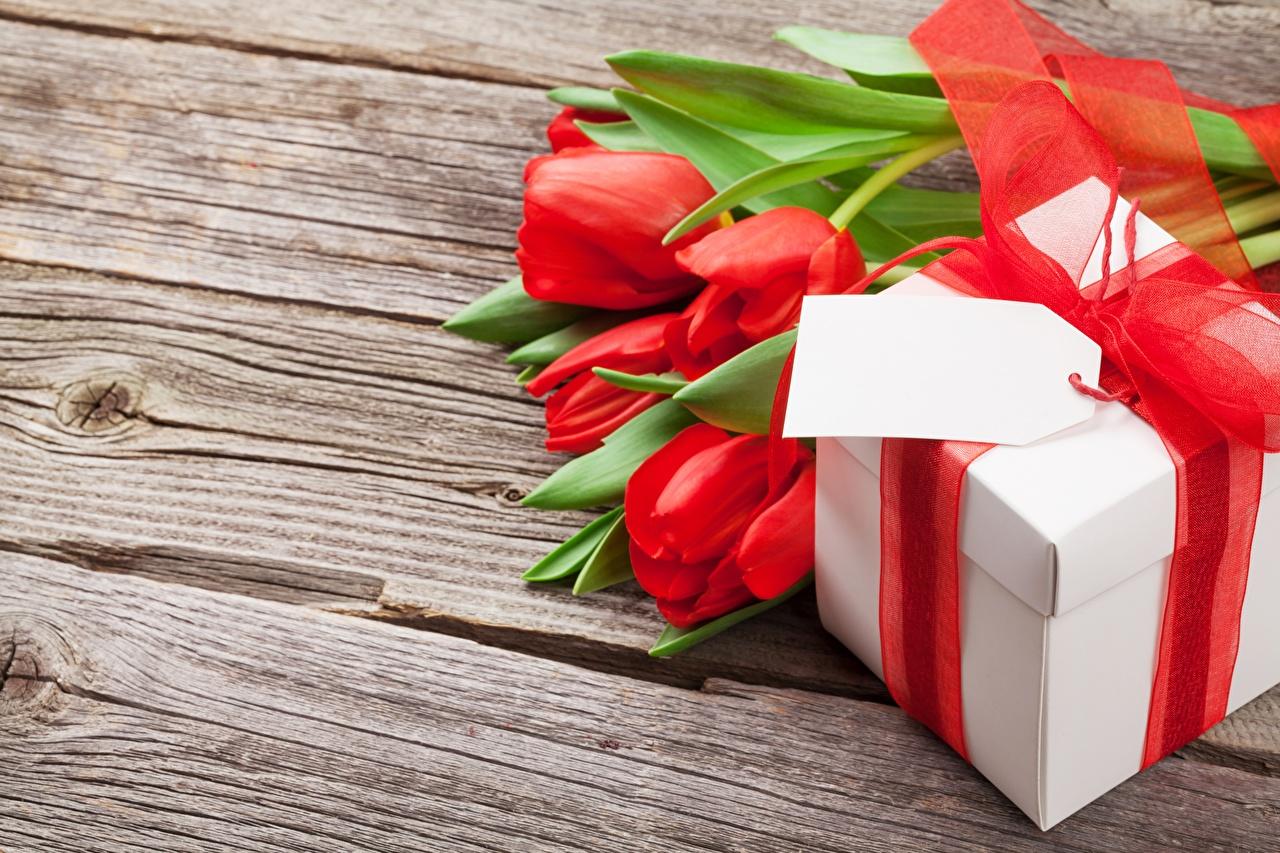 Обои для рабочего стола тюльпан Цветы Подарки Доски Тюльпаны цветок подарок подарков