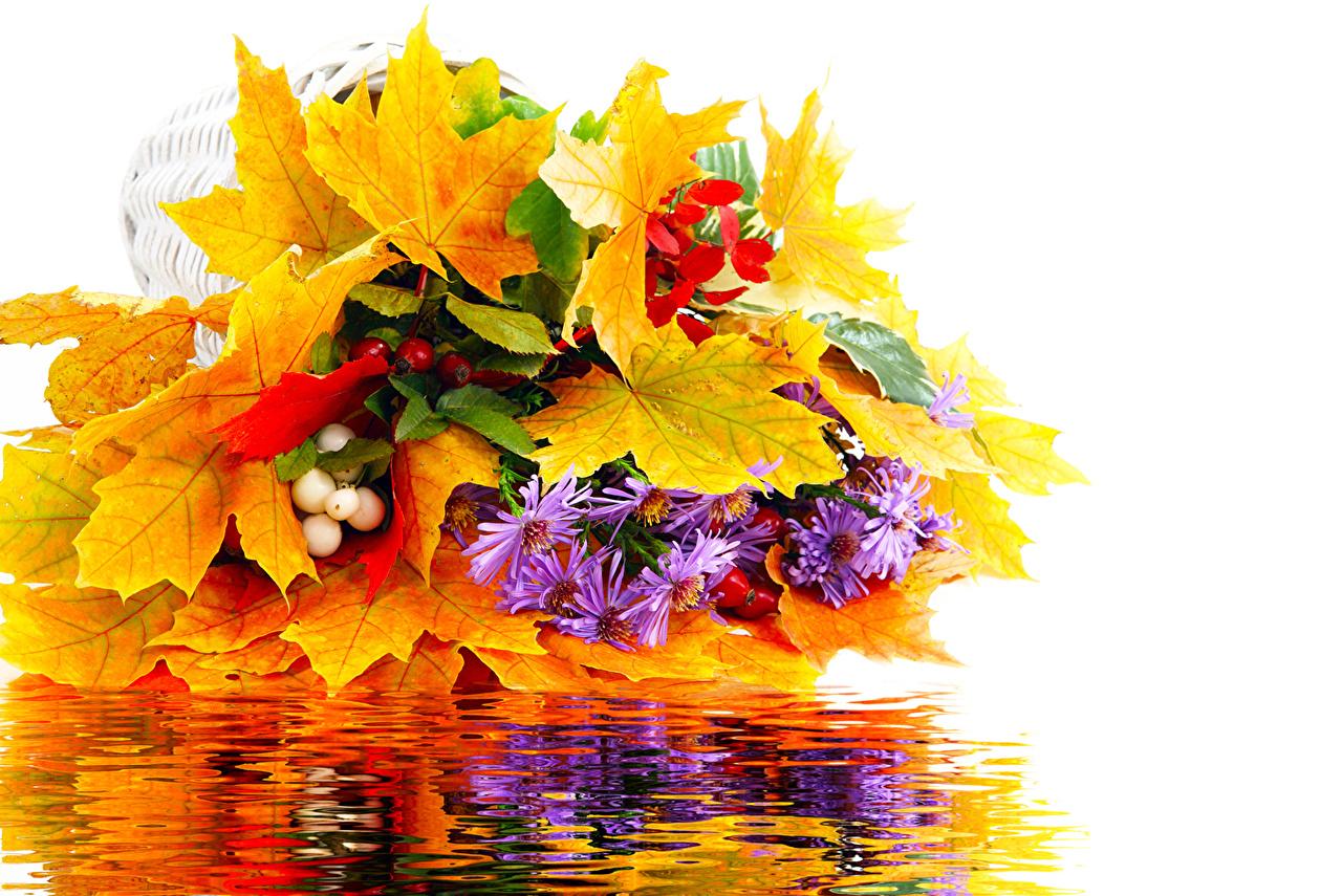 Осенние листья на рабочий стол