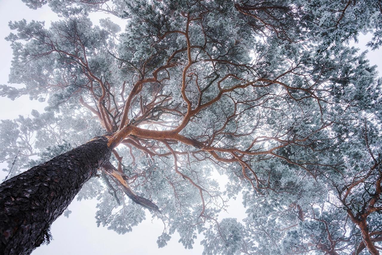 Картинка Вид снизу Природа Ствол дерева Ветки Деревья ветвь ветка на ветке дерево дерева деревьев