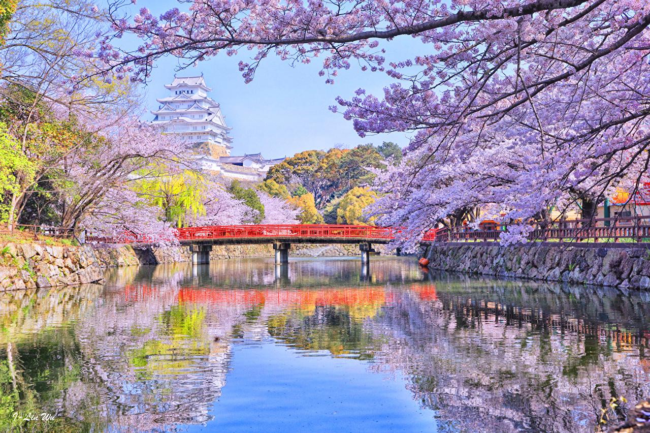 Обои для рабочего стола Токио Япония Мосты Природа весенние Реки Цветущие деревья мост Весна река речка