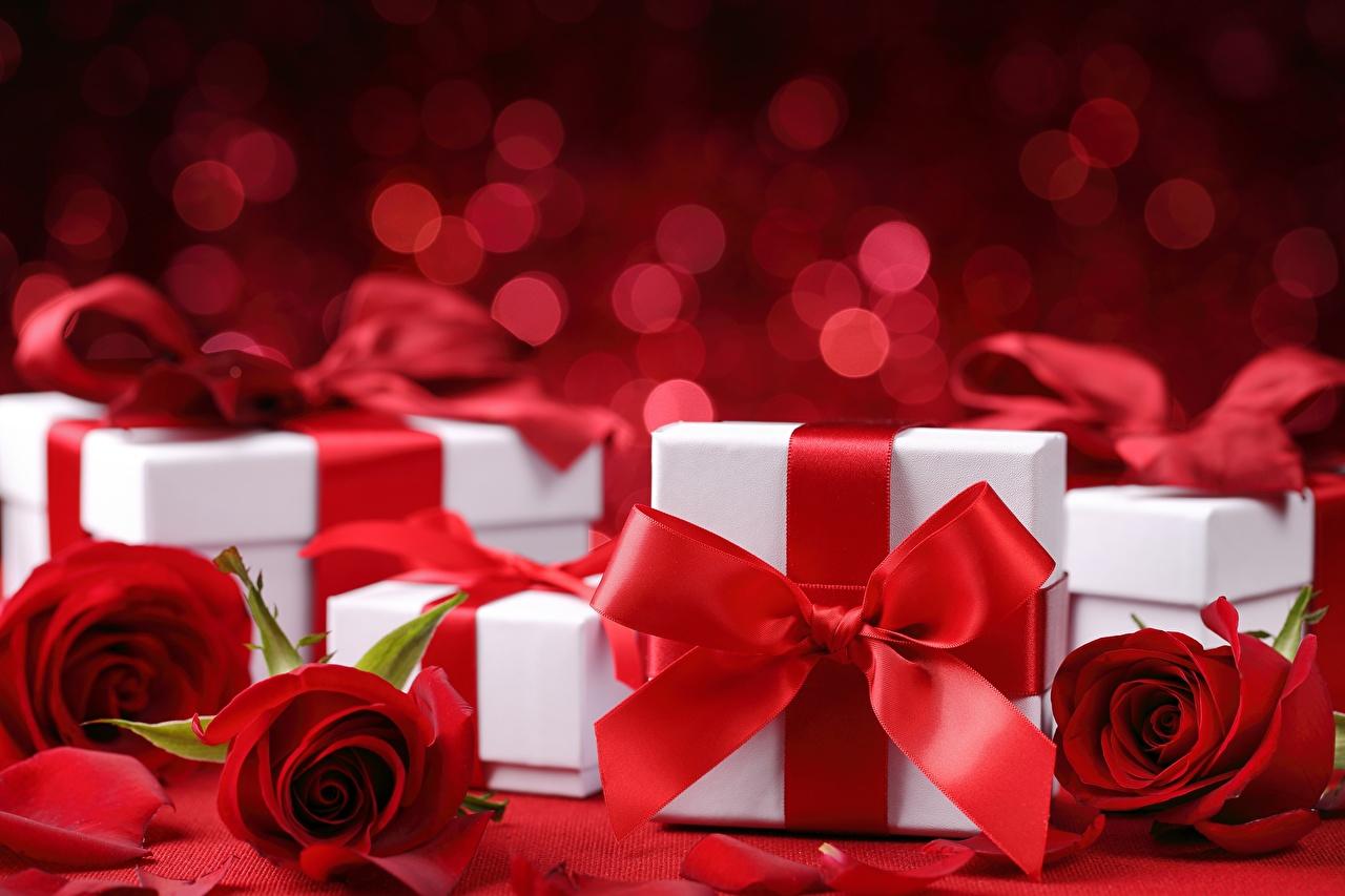 Фотографии Розы красных коробки подарков Бантик роза красная красные Красный Коробка коробке подарок Подарки бант бантики