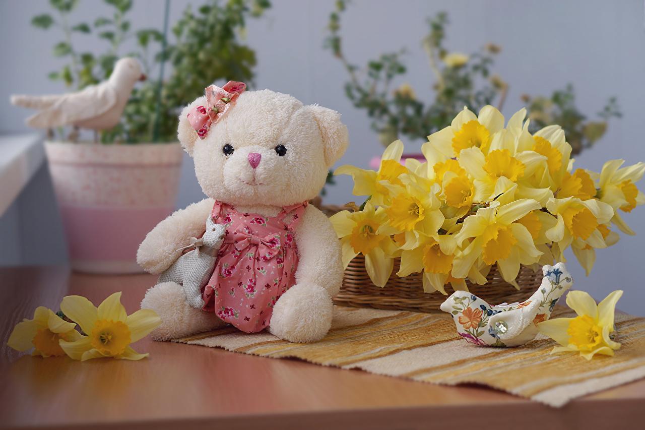 Картинка Мишки Цветы Нарциссы цветок Плюшевый мишка
