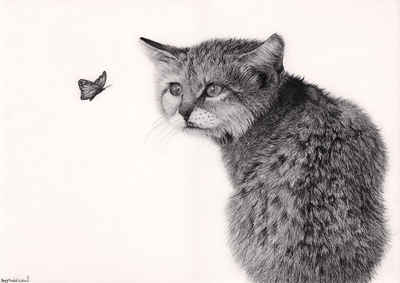 Фотография Кошки Бабочки Черно белое Животные белом фоне Рисованные кот коты кошка бабочка черно белые животное Белый фон белым фоном