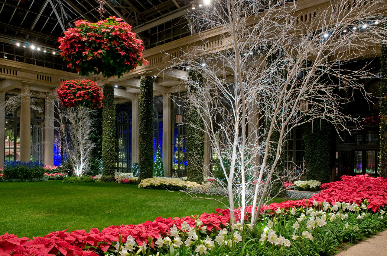 Фотография США Longwood Gardens Природа Сады Амариллис Газон штаты