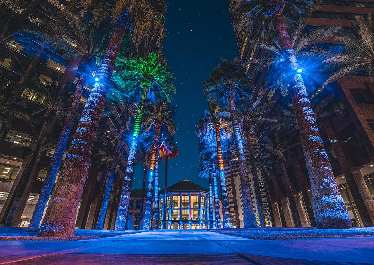 Фотографии США Midtown Phoenix, Arizona улиц пальм в ночи Уличные фонари Дома Города штаты америка улице Улица пальма Пальмы Ночь ночью Ночные город Здания