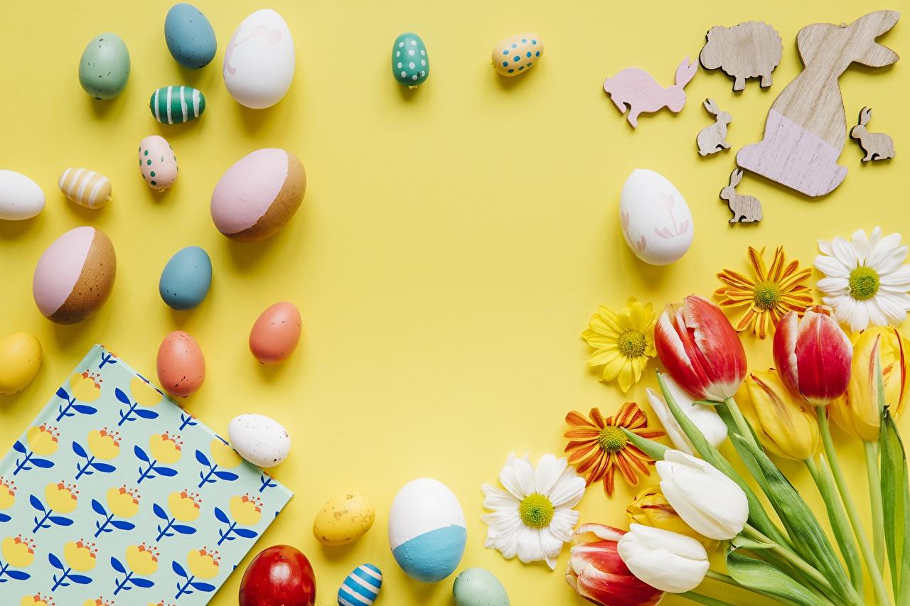 Фотографии Пасха яиц Весна Тюльпаны Цветы ромашка Хризантемы яйцо Яйца яйцами тюльпан весенние цветок Ромашки