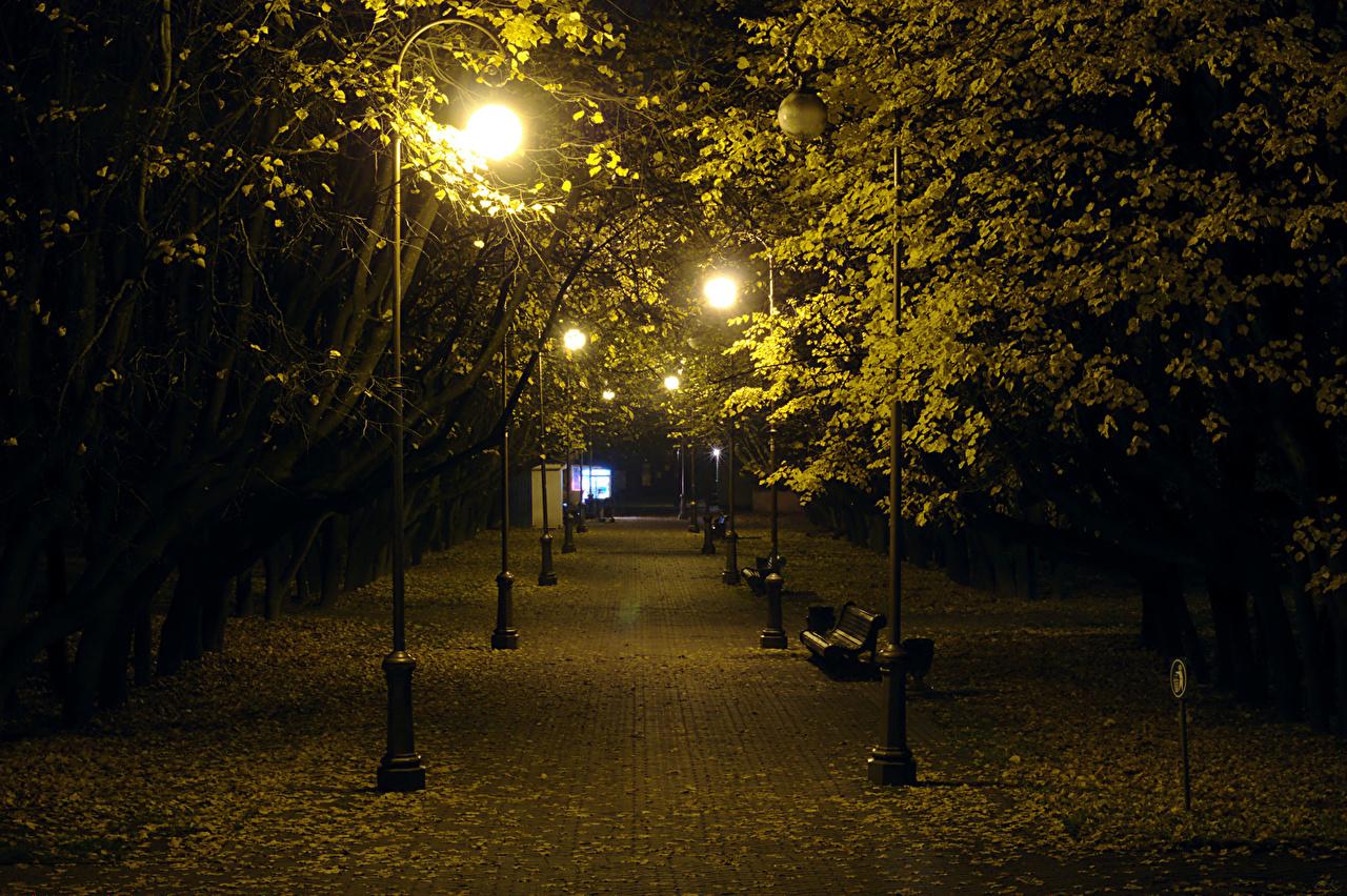 Обои для рабочего стола Листья белоруссия Minsk Осень Природа парк ночью Скамья Уличные фонари дерево лист Листва Беларусь осенние Парки Ночь в ночи Ночные Скамейка дерева Деревья деревьев