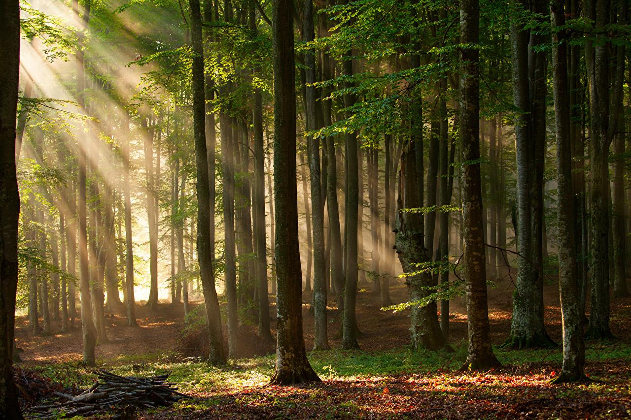 Картинки Лучи света Природа лес Деревья Леса дерево дерева деревьев