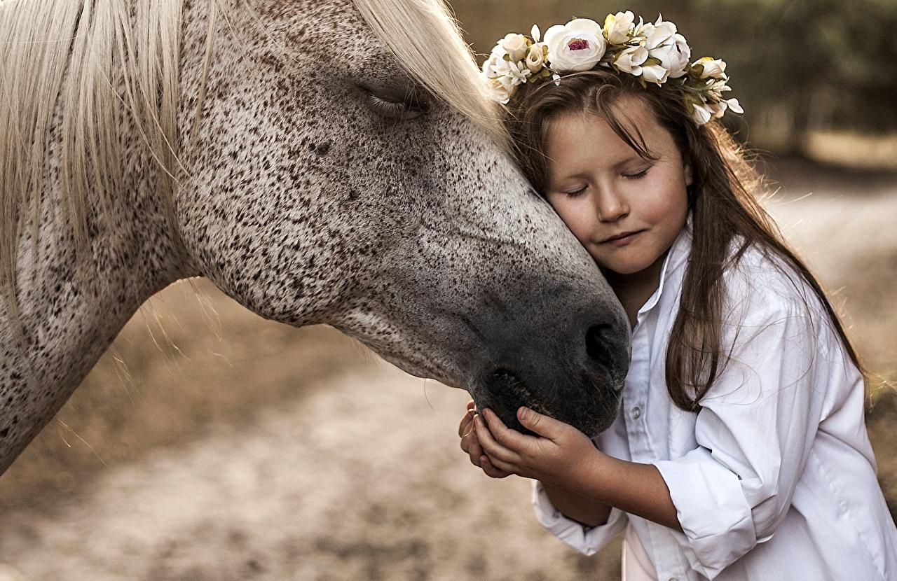 Фотографии Девочки Лошади Дети Венок Любовь Объятие Животные девочка лошадь ребёнок венком обнимает обнимаются животное