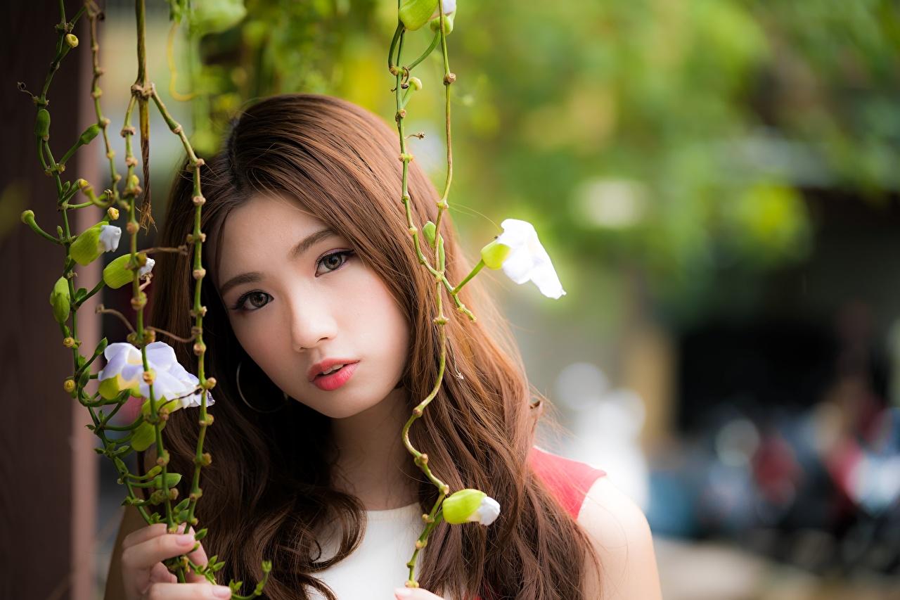Фото шатенки Размытый фон Девушки азиатка Взгляд Шатенка боке девушка молодая женщина молодые женщины Азиаты азиатки смотрит смотрят