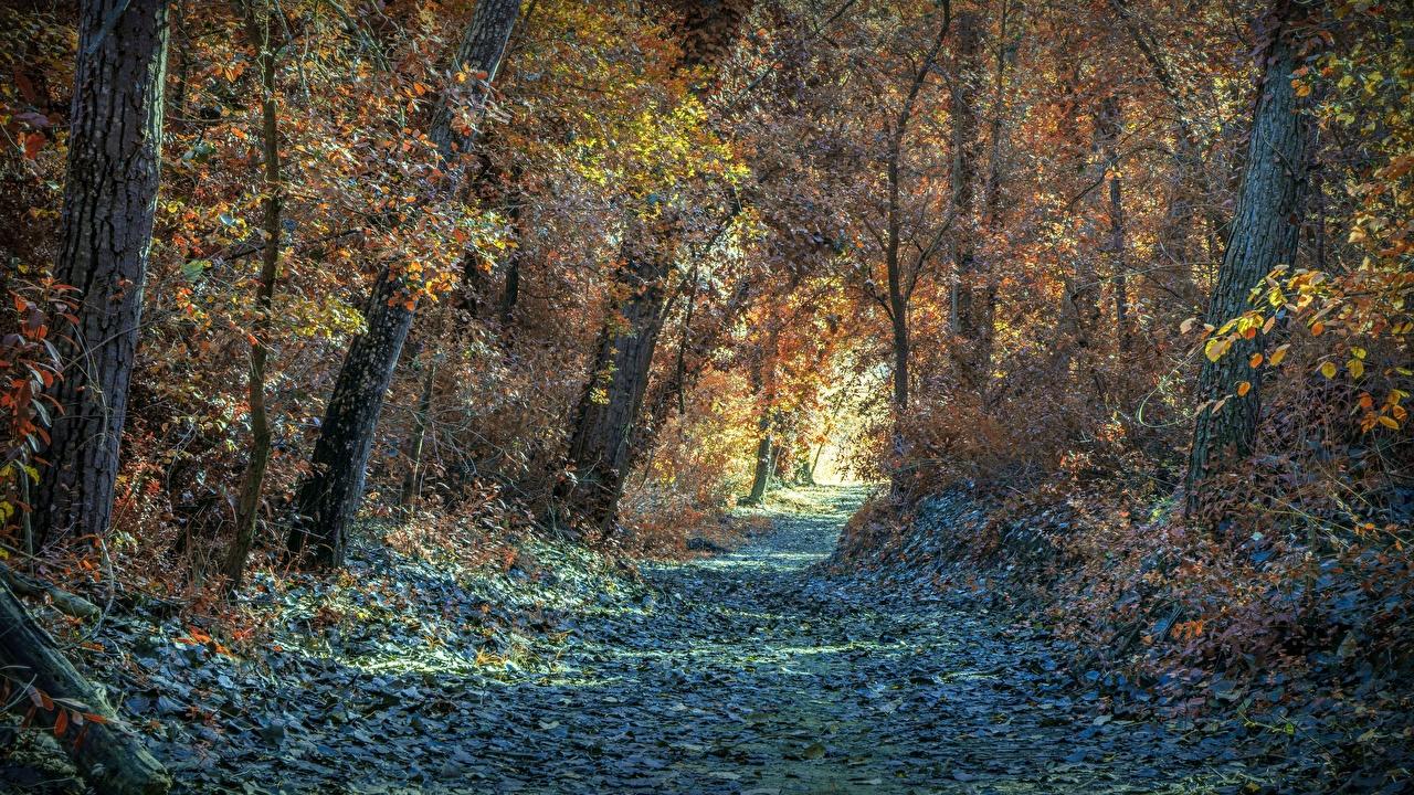Картинки лист Осень Природа тропинка Леса деревьев Листья Листва тропы Тропа осенние дерево дерева Деревья