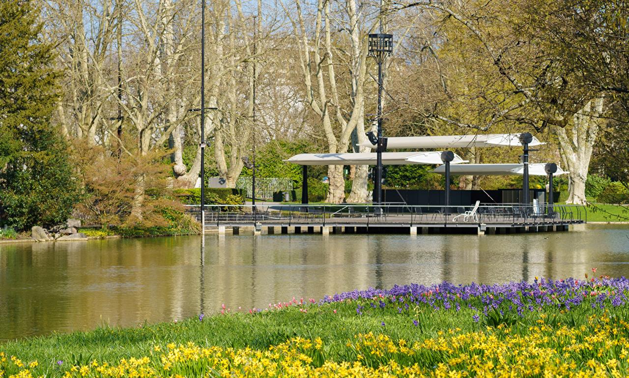 Фотографии Германия Karlsruhe Весна Природа парк Пруд Нарциссы Гиацинты весенние Парки