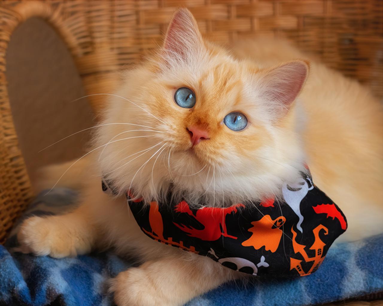 Картинка коты смотрят Животные кот кошка Кошки Взгляд смотрит животное
