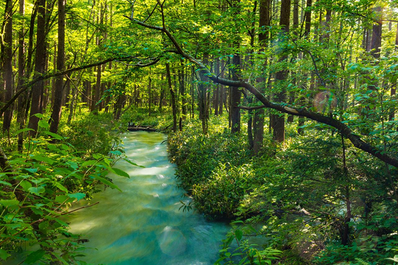 Фотография Япония Kamikochi Nagano Природа Пруд Парки Кусты деревьев парк дерево дерева кустов Деревья