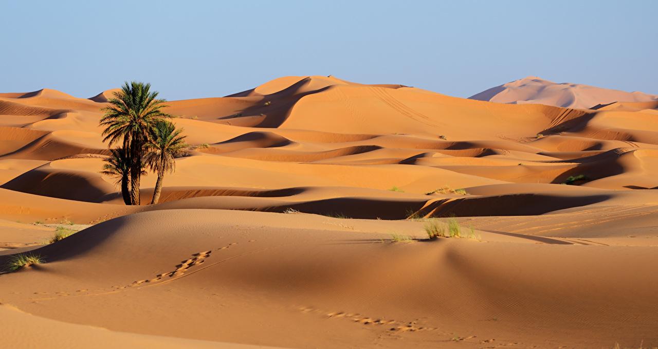 Фотографии Марокко Erg Chebbi след Пустыни Природа Песок пальма Следы пустыня песка песке пальм Пальмы