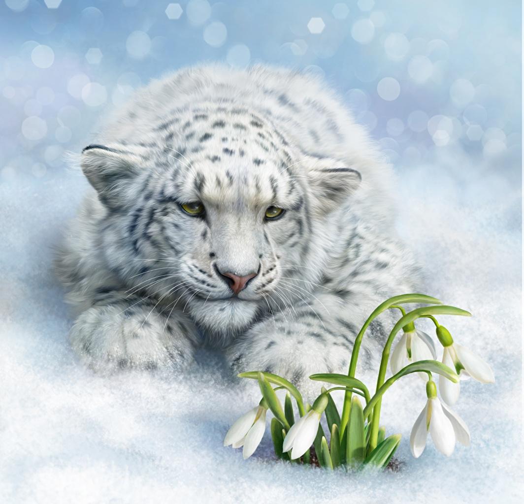 Фото Барсы Галантус Животные Рисованные Ирбис Подснежники животное