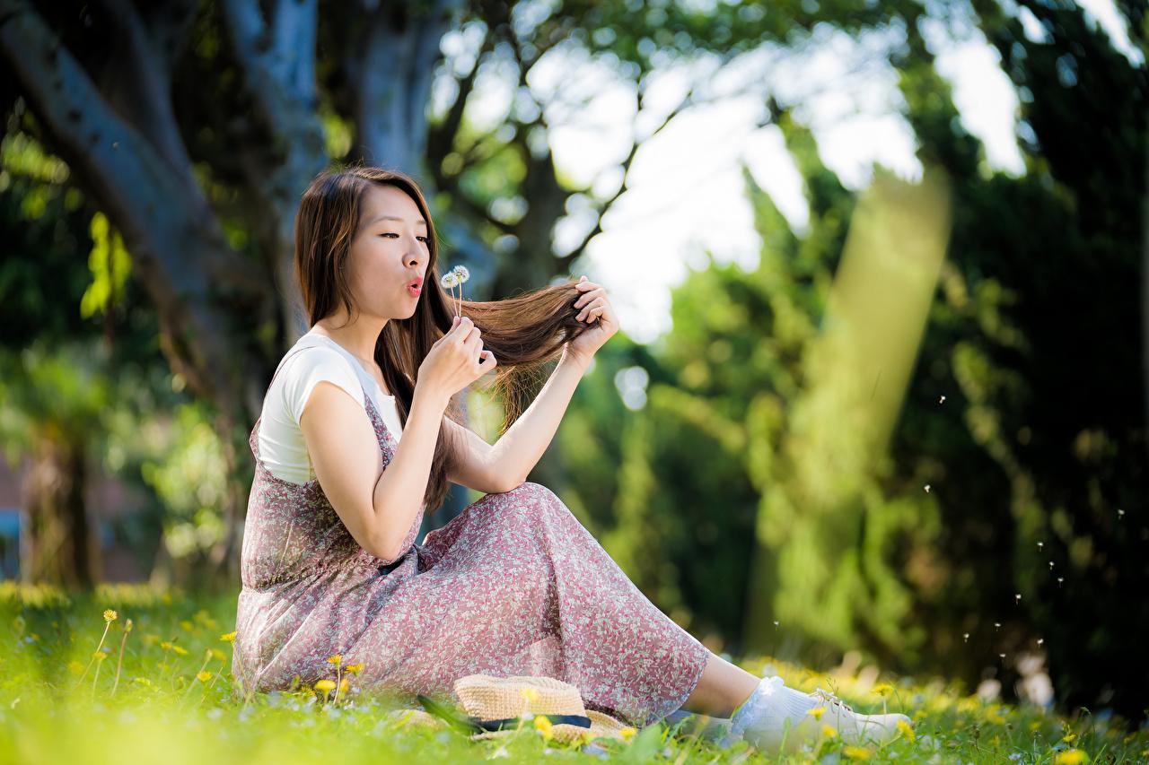 Фотография шатенки Размытый фон девушка Азиаты Одуванчики Руки Трава Сидит Шатенка боке Девушки молодая женщина молодые женщины азиатки азиатка сидя рука траве сидящие