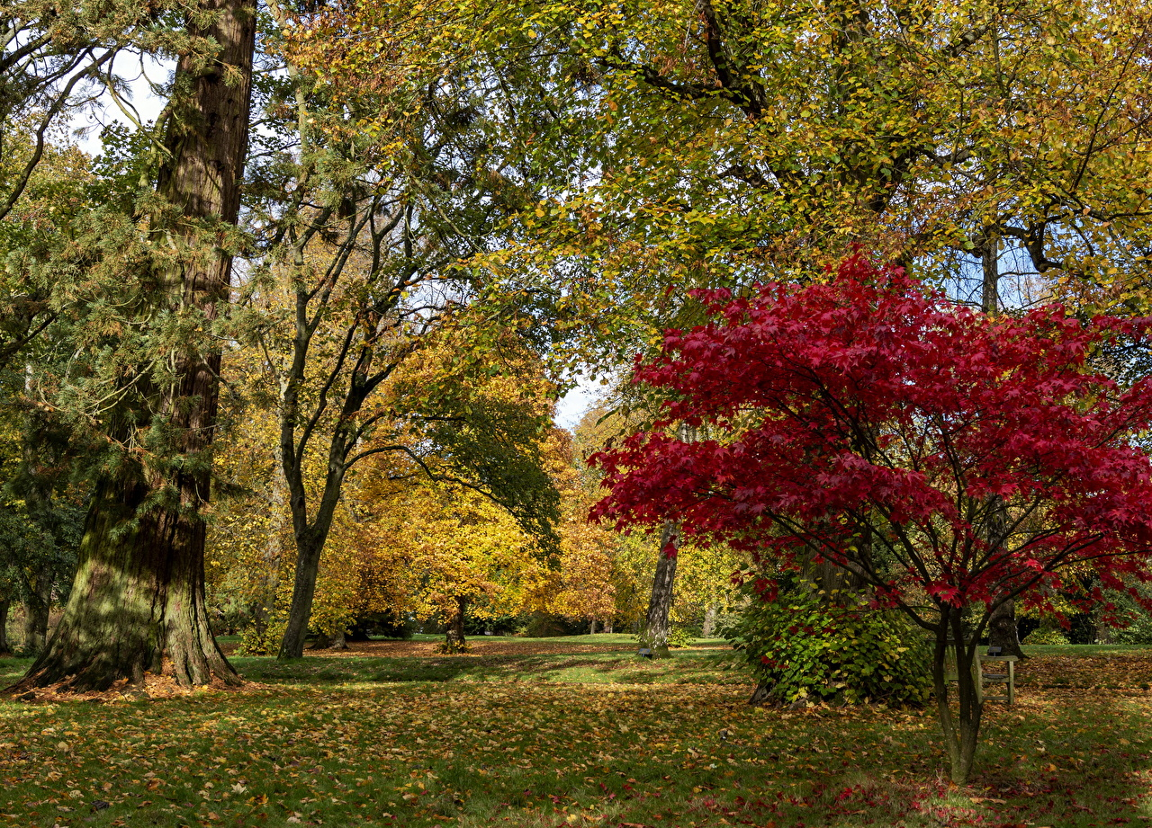 Фото Листья Великобритания Waddesdon Manor park осенние Природа Парки дерева лист Листва Осень парк дерево Деревья деревьев